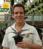 cryptanthus black mystic