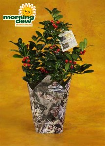 decorated holly