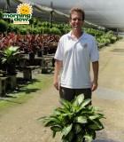 dieffenbachia tropic alix