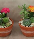 dish garden clay cactus