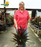 cordyline red pepper