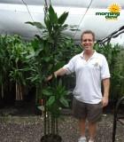 dracaena lind cane