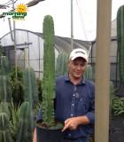 Euphorbia Ingens 10 in