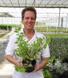 Euphorbia Pedilanthus 6 in