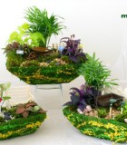 fairy moss garden rectangle
