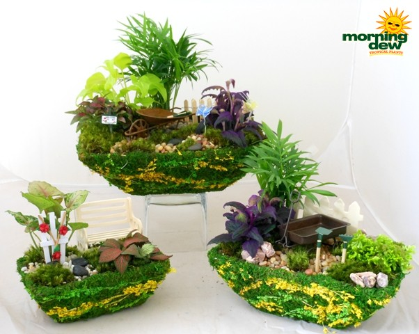 fairy moss garden rectangle - Dish Garden Plants