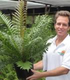 fern brazilian tree