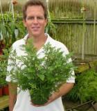 fern cypress