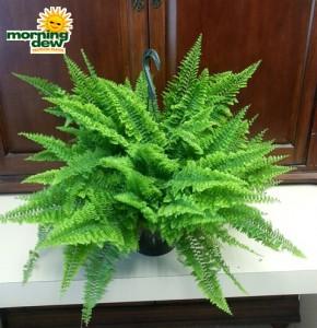 fern green fantasy