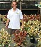 ficus elastica tineke ruby rubber plant