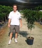 ficus exotica tree
