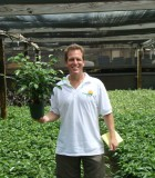 ficus wintergreen bush