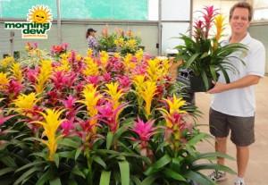gardens bromeliad