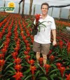 bromeliad guzmania abigail