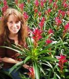 bromeliad guzmania alerta