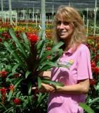 bromeliad guzmania alisha