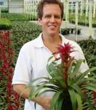 bromeliad guzmania anton