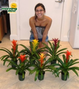bromeliad guzmania assorted