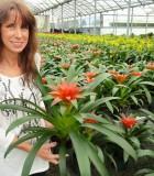 bromeliad guzmania calypso