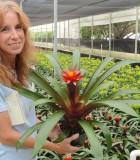 bromeliad guzmania discovery
