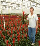 bromeliad guzmania formosa