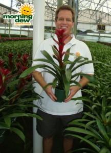 bromeliad guzmania fusion