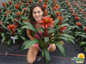 bromeliad guzmania grado