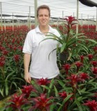 guzmania indian knigh nbromeliad