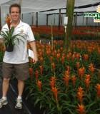 bromeliad guzmania jive