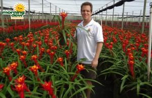 bromeliad guzmania kapoho fire