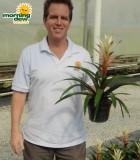 bromeliad guzmania kay