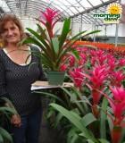 bromeliad guzmania passion