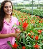 guzmania scarlet bromeliad