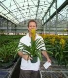 guzmania sunnytime bromeliad