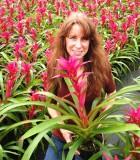 bromeliad guzmania voila