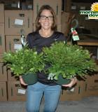 Hanging Basket cactus christmas