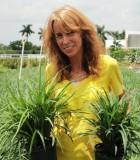 liriope emerald goddess grass