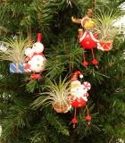 living ornaments