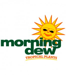 logo morning dew