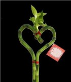 lucky bamboo heart in a vase