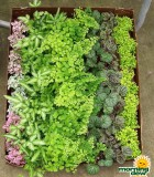 make your own terrarium plants  in