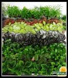 make your own terrarium plants