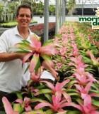 bromeliad neoregelia pink sensation