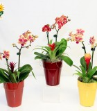 orchid clay garden