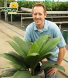 palm jungle drum