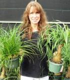 ponytail multi Guatemalan palm