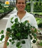 pothos green genie