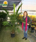 ravenea majesty palm