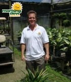 rhapis excelsa variegated palm