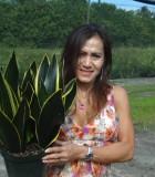 sansevieria black jack snake plant